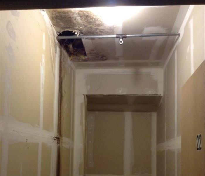 Graham Wa Mold Removal And Remediation Including Black